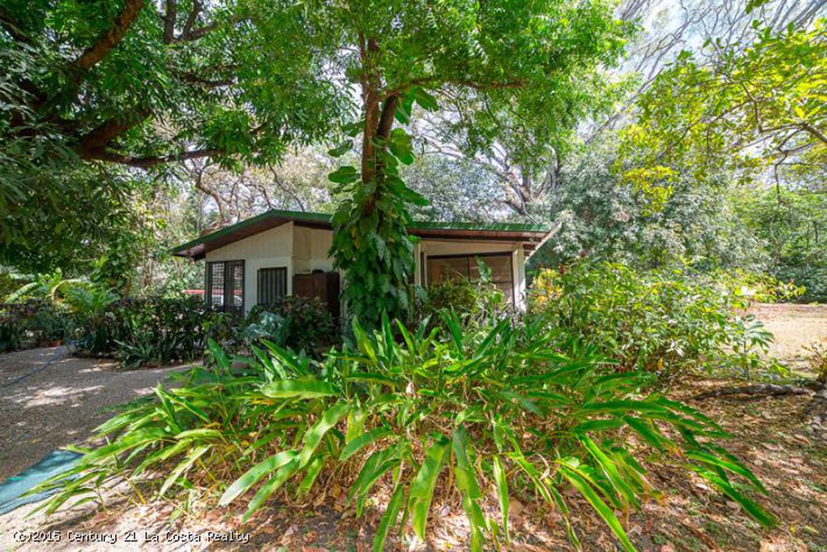 Casa Trogon and the Tree House