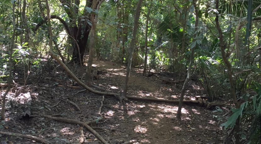 Trails 1