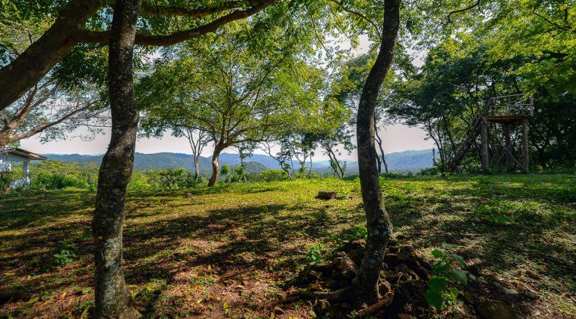 Pelada View