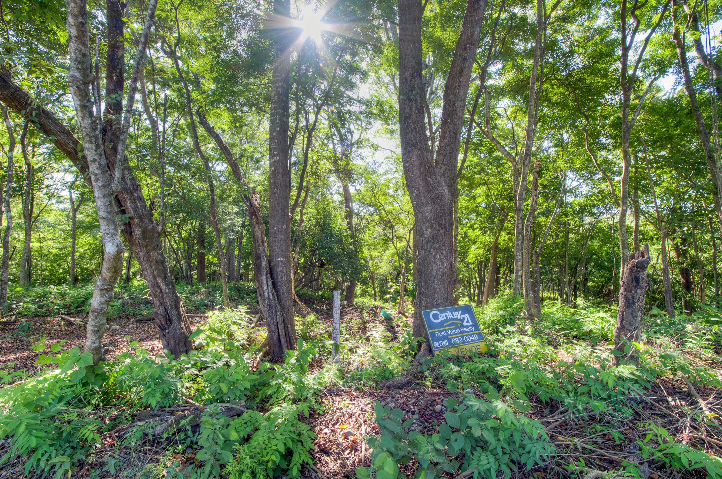 Wooded property L section