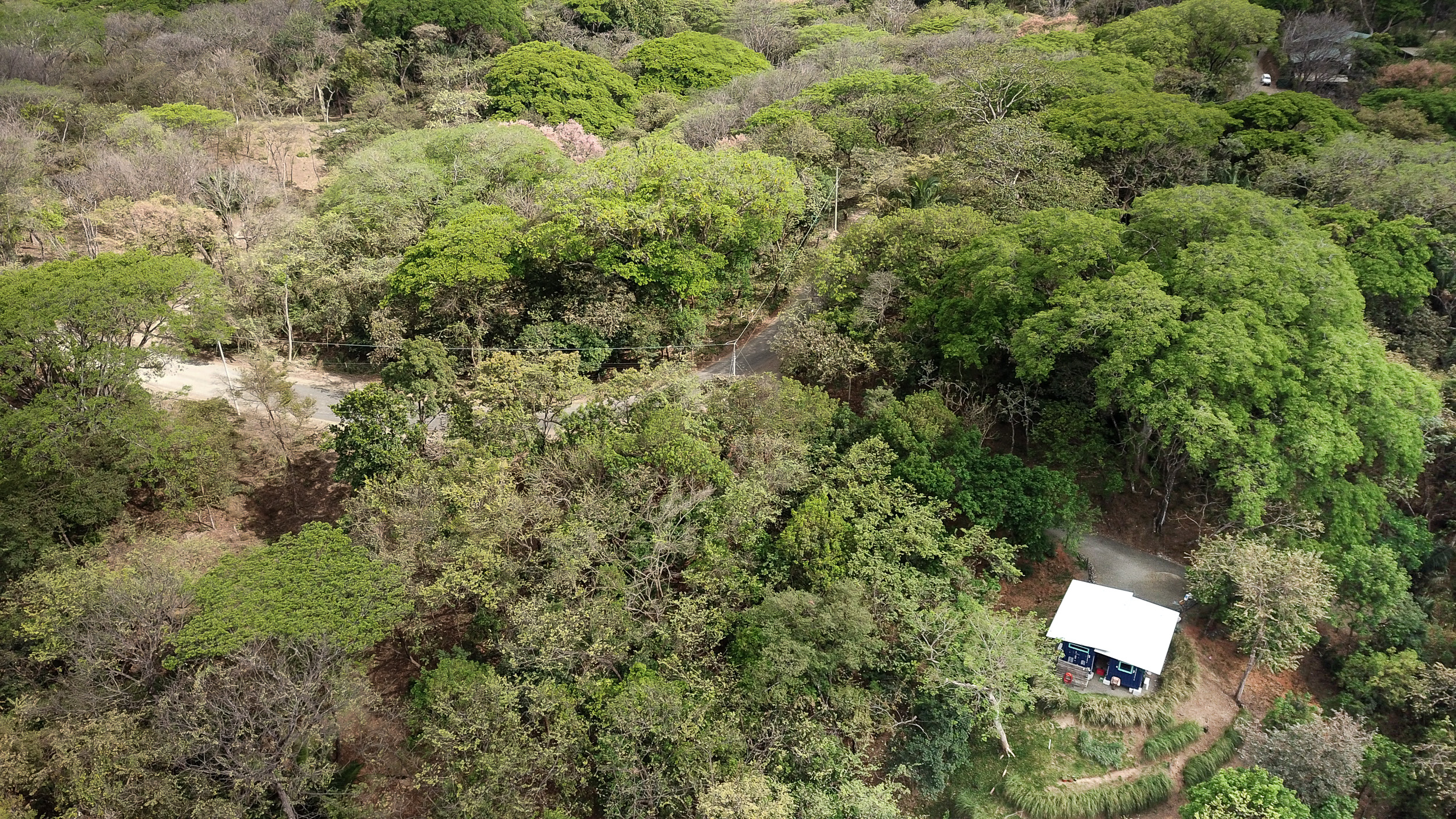 Private lot with mature trees and elevated forest view